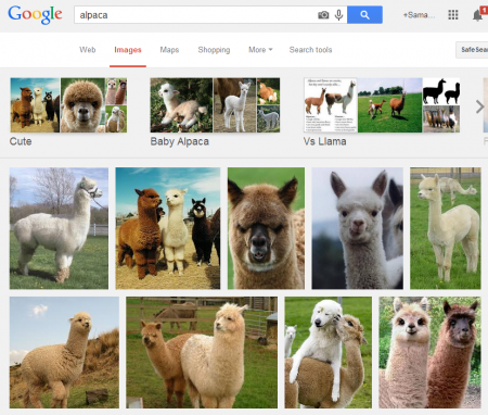 google image search for alpacas