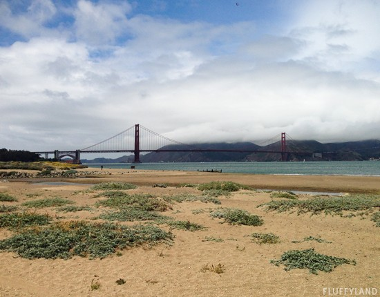 golden gate bridge, view from the beach