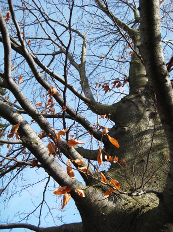 fat tree
